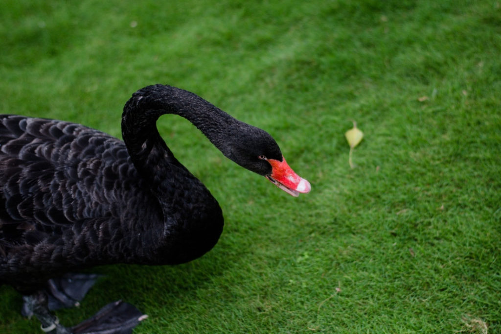 Black Swan events: never try to predict the unpredictable